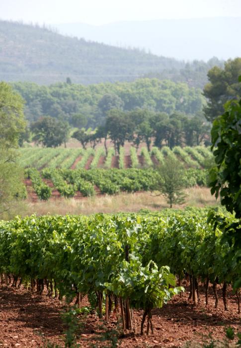 Le vignoble du Jas d'Esclans
