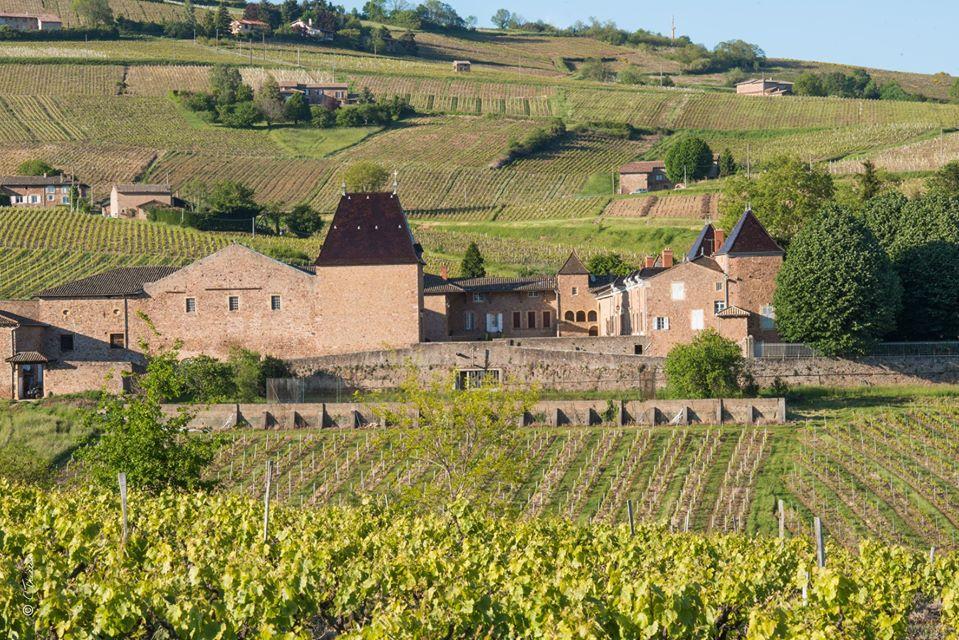 Château de Juliénas. Le domaine compte 35 ha de vignes en appellation Juliénas. Les vignes sont âgées en moyenne de 45 ans. Thierry Condemine cultive ses vignes en lutte raisonnée, la récolte est manuelle et la vinification traditionnelle.