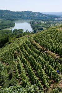 Côte-Rôtie (Côtes du Rhône septentrionales)