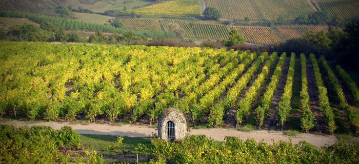 Vignoble du château de Plaisance