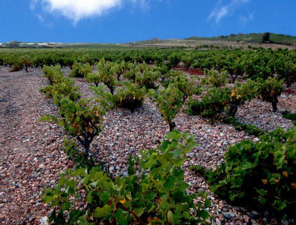 Lesquerde (AOC Côtes du Roussillon-Lesquerde)