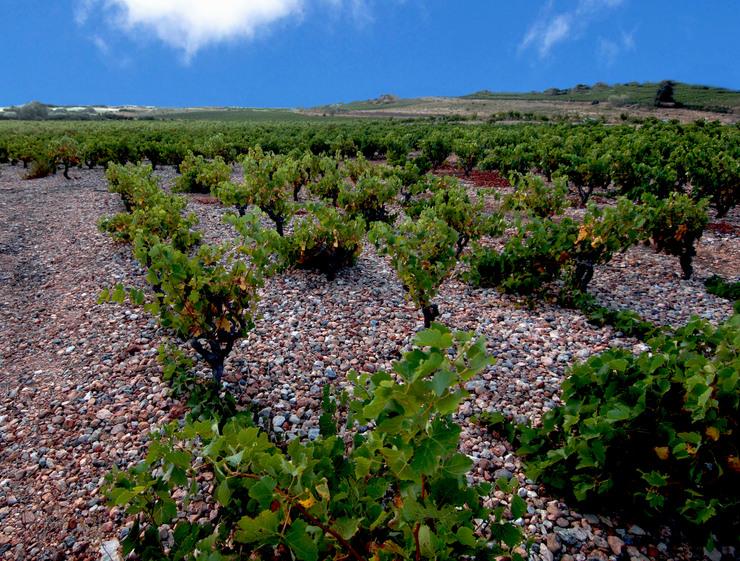Côtes du Roussillon Villages-Lesquerde