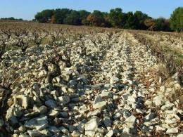 Massif d'Uchaux, un sol très pierreux constitué de grès silico-calcaire