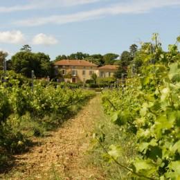 Château Saint-Estève d'Uchaux dont 48 ha sont cultivés en agriculture biologique