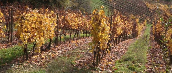 Vignoble du Pacherenc du Viv Bilh à l'automne