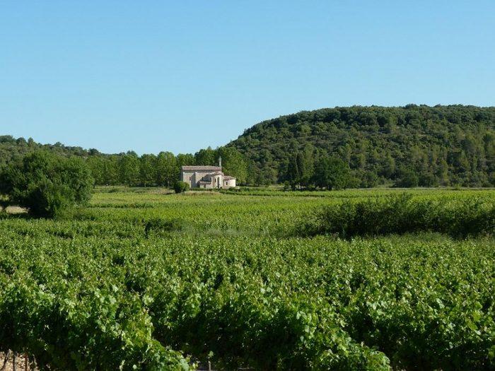 La Coste d'Aleyrac du château de Lancyre en appellation Pic Saint-Loup