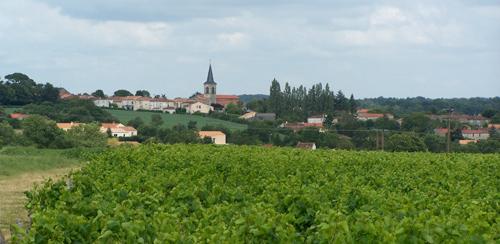 Pissote en appellation Fiefs Vendéen