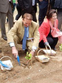 Chambord juin 2015, Henry Marionnet plantant le premier plant de son romorantin pré-phylloxérique