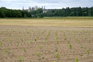 Romorantin (cépage blanc) Cour-Cheverny et Château de Chambord (Loire)