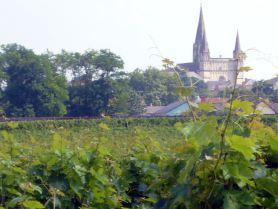 Le Puy-Notre-Dame, vignoble du Saumurois