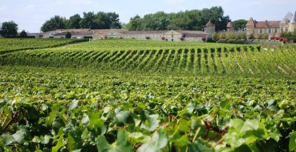 Ch.teau.d.Yquem.et.son.vignoble.entretenu.comme.un.jardin (1)