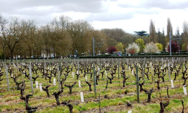 Pour Chenonceaux, arrêt gare de Chenonceaux sur la ligne Tours-Vierzon ou Bourges. On descend du train (TER Centre) au milieu des vignes