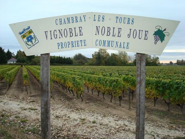 Noble Joué, vignoble à Chambray-lès-Tours