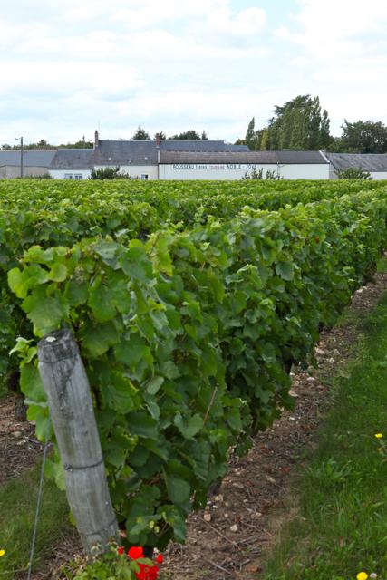 Noble Joué vignoble du domaine Rousseau Frères à Esvre près de Tours