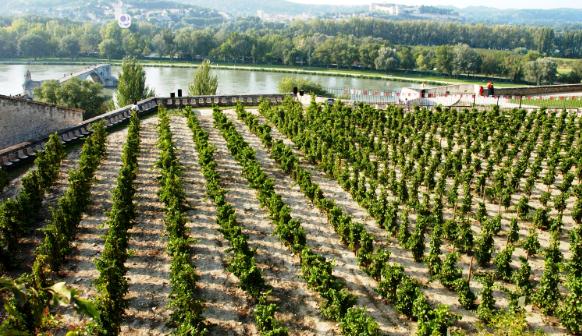 Le Clos de la vigne du Palais des Papes