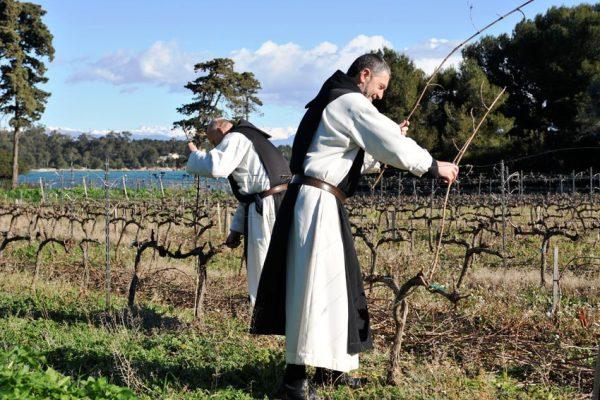 Lérins (abbaye de Lérins) vins de Lérins (Côte-d'Azur)