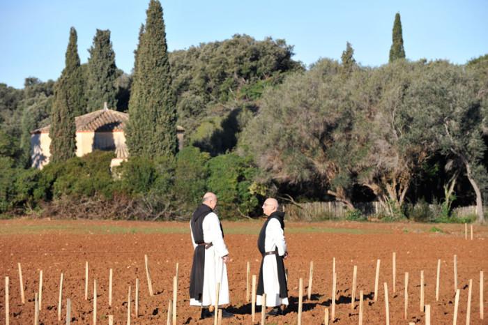 Sur Saint-Honorat, 8 ha de vignes