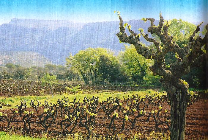 Vignoble du domaine Jas d'Esclans