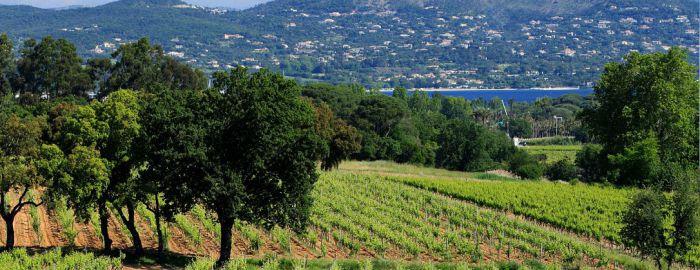 Vignoble du château Minuty