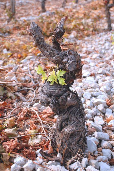 Tutu (mot argotique pour désigner le vin)