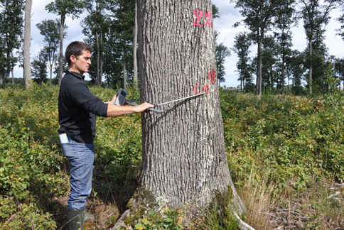 Sélection de chênes dits de haute futaie