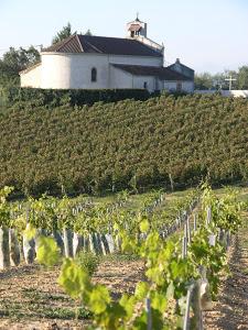 Vignoble de Puyol-Cazalet en appellation Tursan