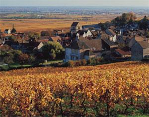 Volnay typicité Bourgogne