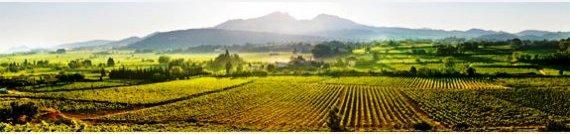 Vignobles de l'appellation Vaqueyras (Photo Maison des vignerons)