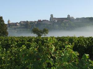 Vézelay (AOC Vézelay) Bourgogne (Yonne)