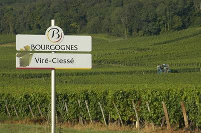 Viré-Clessé (AOC Viré-Clessé) appellation communale du Mâconnais (Bourgogne)