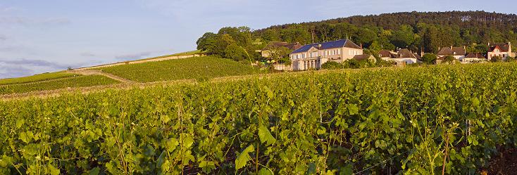 Vignoble de Volnay