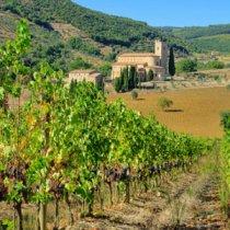 Vignoble en Toscane