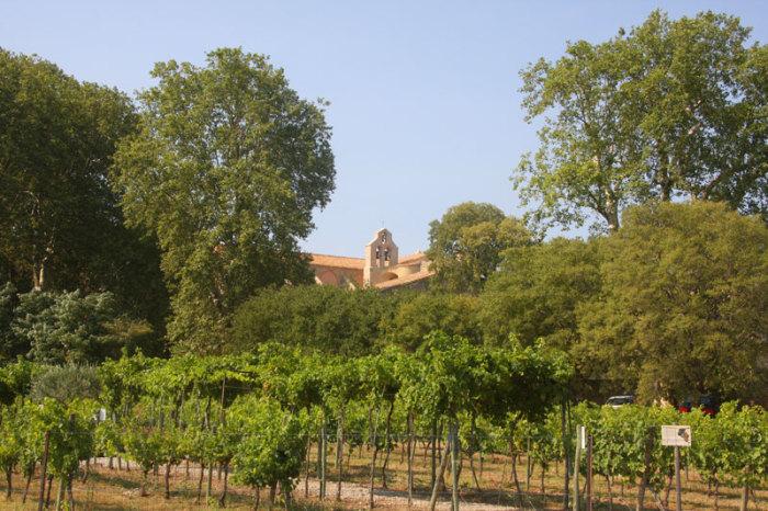 Vignes de l'abbaye de valmagne
