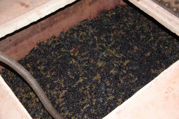 La vinification beaujolaise