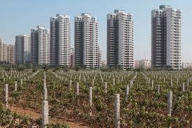 Vignoble dans le Shandong