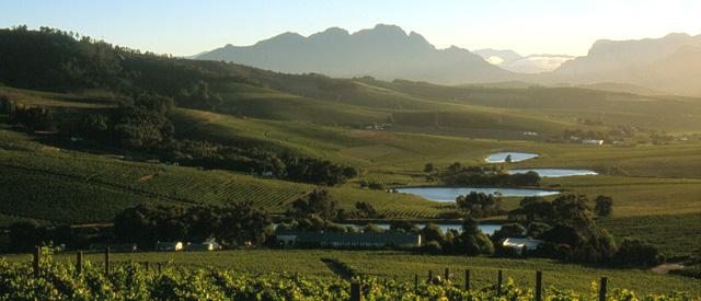 Vignobles d'Afrique du Sud