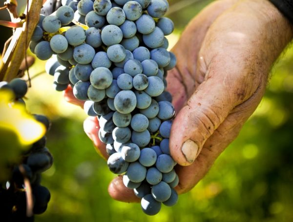 Zymase (chimie du vin)