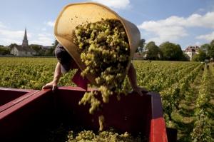 Bourgogne bilan et chiffres clés
