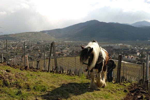 le-brand zind Humbrecht (cheval)