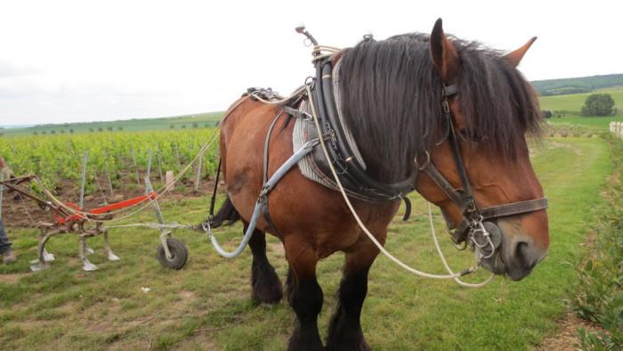 Le-travail-du-cheval-dans-le-Clos-du-Moulin