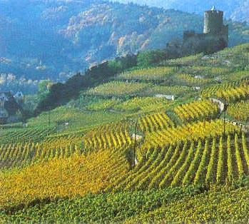 Domaine Weinbach Grands vins d'Asace
