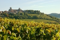 Vignoble de Vézelay