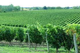 Vins du Thouarsais (AOC Anjou)