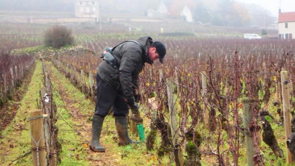 Pierre-Jean Roty dans sa vigne de Mazis-Chambertin