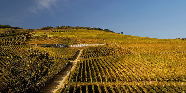 Tokay (Hongrie). Le vignoble historique Hétszőlő