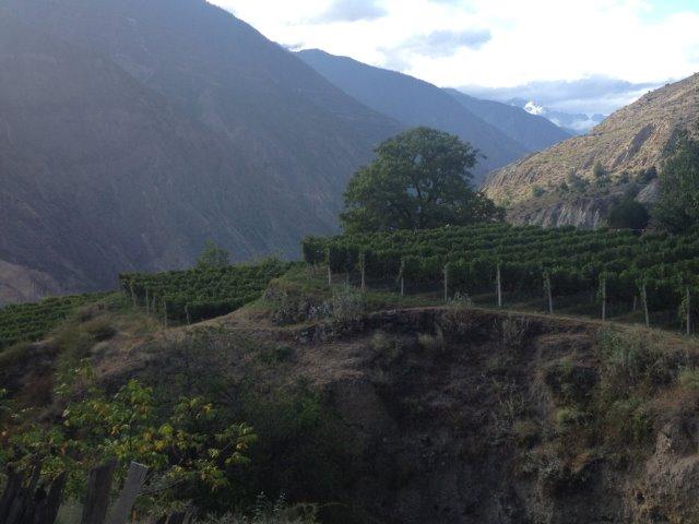 Les vignobles du Yunnan en Chine