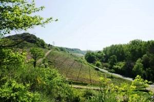 Beaulieu-sur-Layon : Les Coteaux du Pont Barré