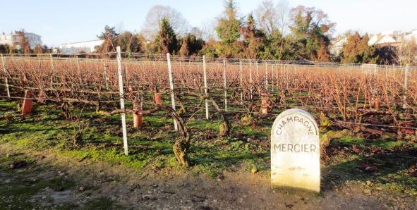 Vigne audessus de la maison Mercier à Epernay