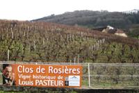 Le Clos de Rosières, 47 ares à Montigny-les-Arsures (Jura)