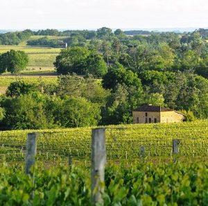 Madiran AOC/AOP (vin du sud-ouest)